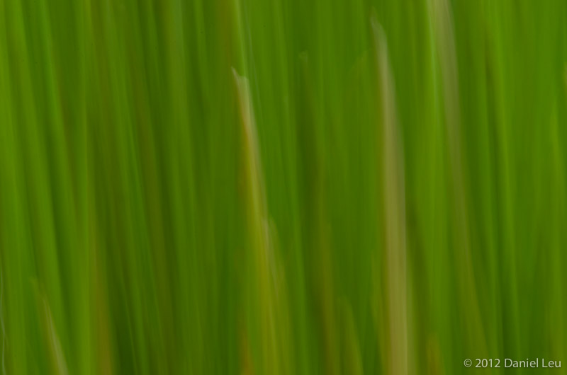 Horsetail, abstract