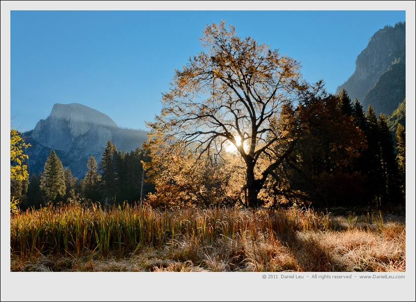 Half Dome and Elm Tree at Sunrise, Cook's Meadow, Yosemite National Park